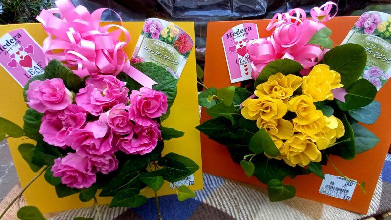 愛妻の日(1月31日)にお花を
