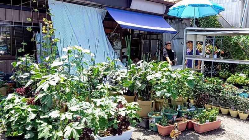 店主の夏野菜栽培レポート