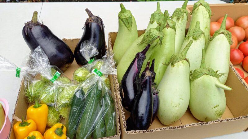 新鮮野菜も 売ってます!